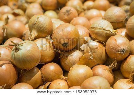 Fresh onions. Onions background. Ripe onions. Onions in market. Fresh golden onions