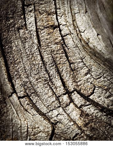 abstract background or texture detail of an old stump with cracks
