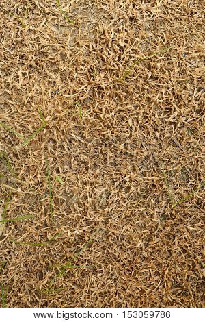 close up dry grass texture, nature background