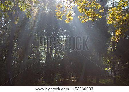 light of the sun shines in autumn city park