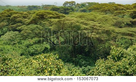 Detailes view of deep forest with trees in Uganda