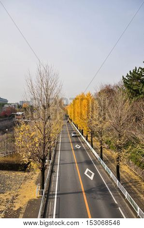 The city road and trees in Autumn Osaka Japan