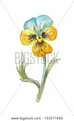 One yellow flower garden watercolor. Pansy sketch isolated on white background garden flower