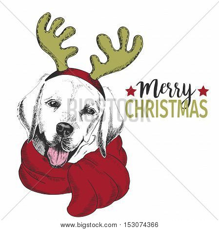 Vector portrait of Christmas dog. Labrador retriever dog wearing deer horn rim and scarf. Christmas poster flyer greeting card holiday celebration party pet shop shelter pharmacy decoration.