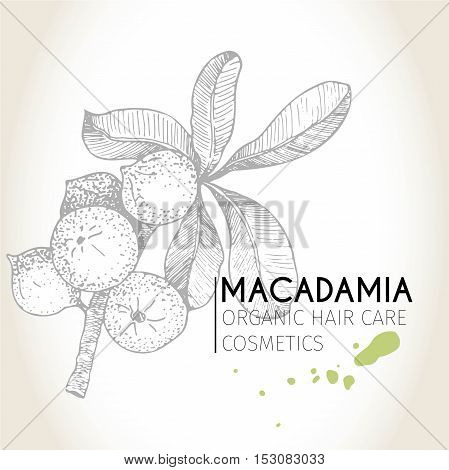 Vector set of hair care ingredients. Organic hand drawn elements. Macadamia branch. Use for cosmetic package shop store products spa salon wellnes program procedure skin hair care
