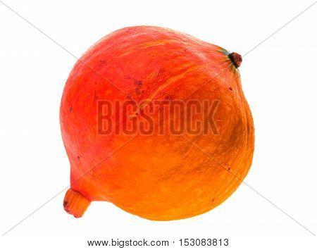 Red Kuri Squash - Orange Hokkaido Pumpkin Isolated On White