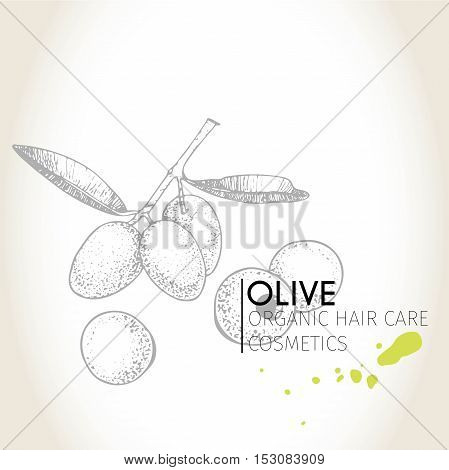 Vector set of hair care ingredients. Organic hand drawn elements. Olive branch. Use for cosmetic package shop store products spa salon wellnes program procedure skin hair care