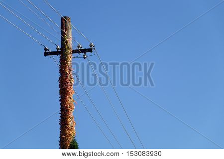 power pole covered with red and yellow colored leaves
