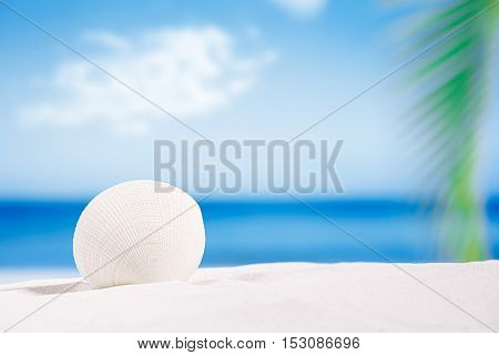 white tropical shell on white Florida beach sand under sun light, shallow dof