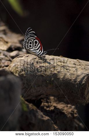 Beautiful butterfly with bright red and white color