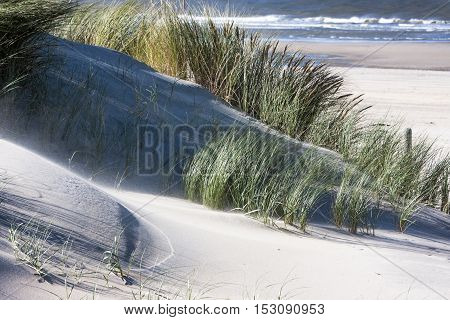 Windy dunes and the sea in the background in the Netherlands