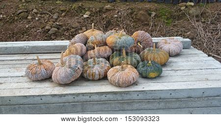 Stack of the pumpkins on the wooden bench