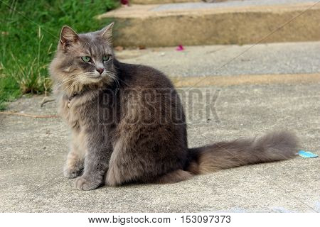 Cute cat sitting and relaxing on the ground