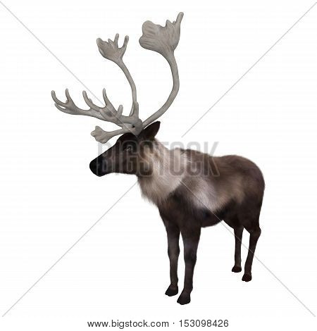 3D rendering of a caribou isolated on white background