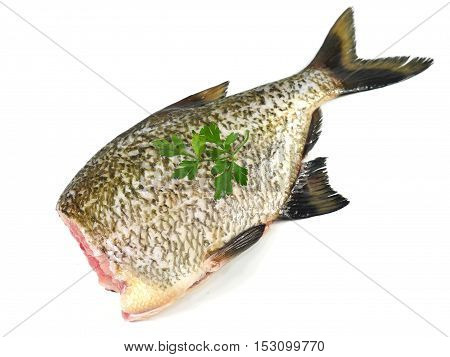 big fresh fish bream on white background