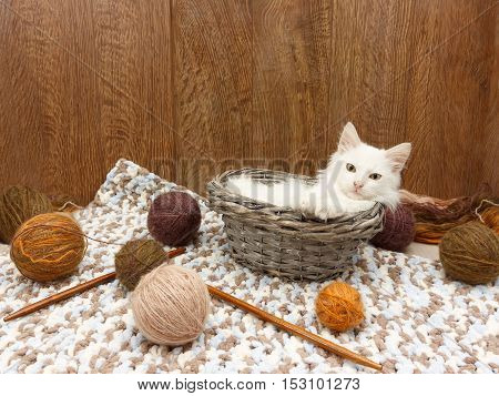White fluffy kitten lies in the  basket near balls of yarn and wooden spokes in the interior