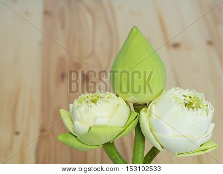White lotus on a wooden table. lotus from Thailand.