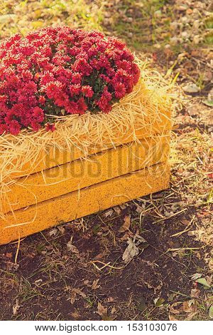 Red Chrysanthemums In Yellow Wooden Box Effect Instagram