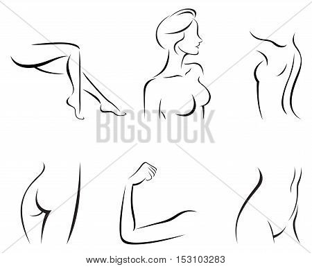 Vector illustration of set of stylized female body parts