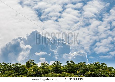 Natural Background