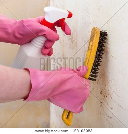 removing of mold from room wall with chemical liquid spray and metal brush
