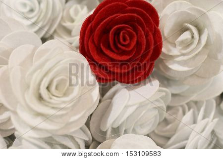 Red Rose And Many Small White Roses