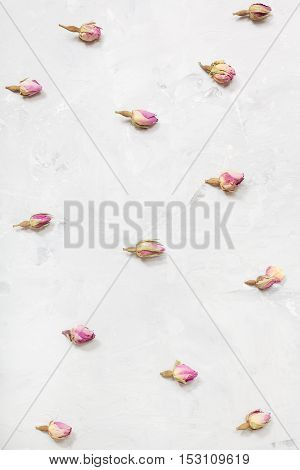 Rose Flower Buds On Gray Concrete Board Close Up