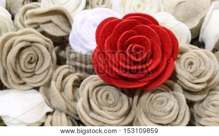 Single Red Rose And Many Roses