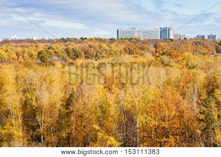 Yellow Forest And Urban Apartment House In Autumn