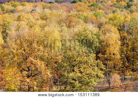 Above View Of Yellow Trees In Fores In Autumn Day
