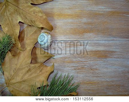 autumn yellow leaves lying on wooden boards with a twig of spruce and a shell
