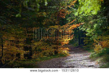 Hidden Forest Path in Autumn season, close up