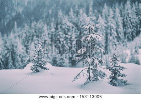 Fantastic winter landscape with snowy trees. Carpathians, Ukraine, Europe.. Toned like Instagram filter