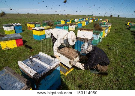 Horizontal photo of beekeepers in white protection working on their bee hives on a green field
