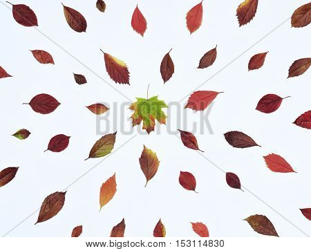 Autumn composition with bright red leaves directed towards the center. In the center is a maple leaf. Top view flat lay on a white background.