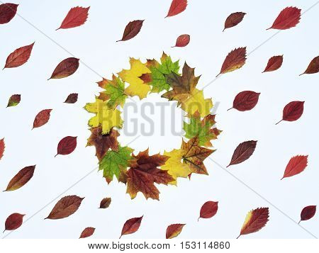 Autumn composition with bright red leaves placed diagonally and a wreath of yellow maple leaf in the center. Top view flat lay on a white background.