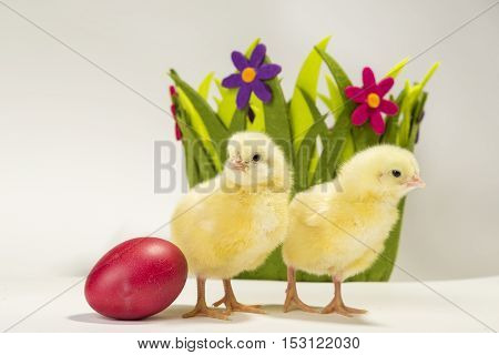 Two small yellow chickens standing next to painted Easter egg with green basket with flowers in the background