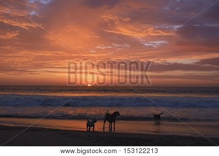 Dogs playing on beach with beautiful sunset background