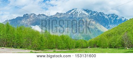 The wide forest glade in Kazbegi National Park with the huge snowy peaks of Greater Caucasus Range on the background Georgia.
