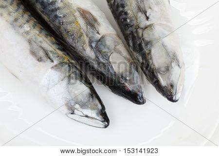 Group of frosen atlantic mackerel on white background