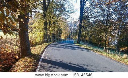 Asphalt road through the forest in landscape