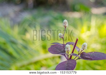 Wild field flowers with on blurred background