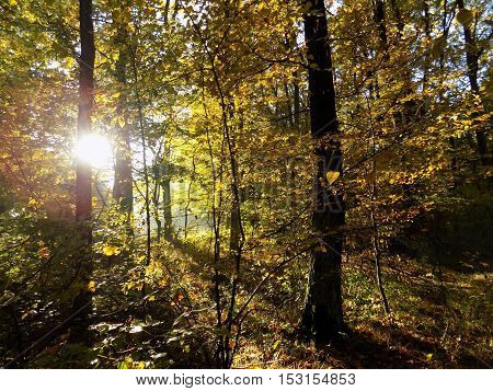 Colorful leaves on deciduous trees in park during autumn and lighting sun during sunrise