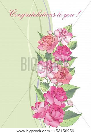 Vector illustration. Beautiful greeting card with blooming balsam flowers