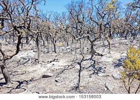 Burnt forest in the countryside from Portugal
