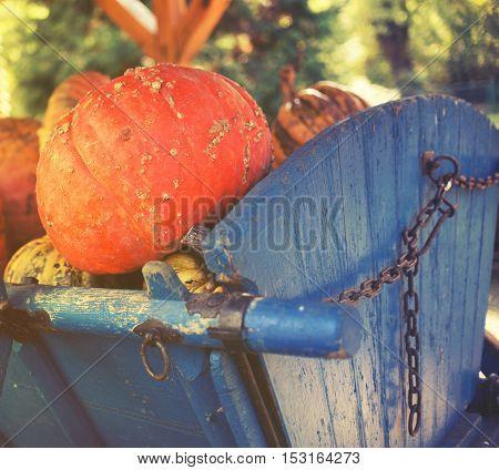 Group Of Colorful Pumpkins On Rural Basket
