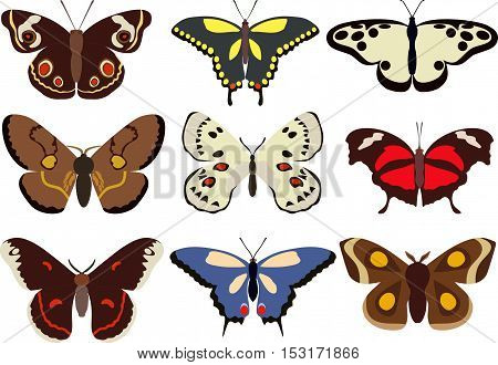 Detailed illustration colorful butterflies isolated in flat style on white background. Collection of butterflies.