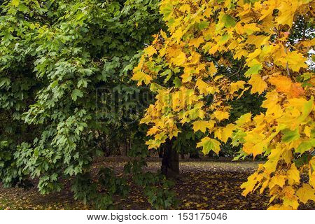 Daylight autumn scene shot in forest showing a multitude of coloured dried leaves, creating a great seasonal mood.