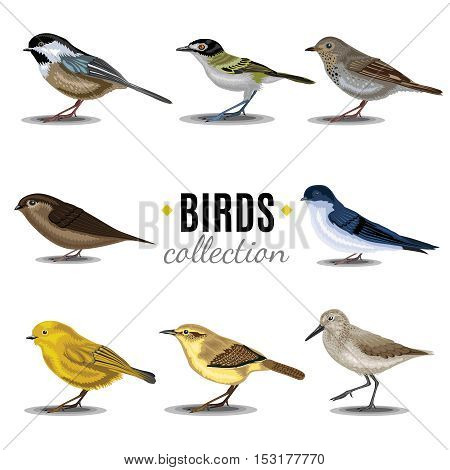 Diferent Birds collection. Sandpiper,swallow,trush, Vaux's-Swift, Vireo, Wren, Warbler, Wren
