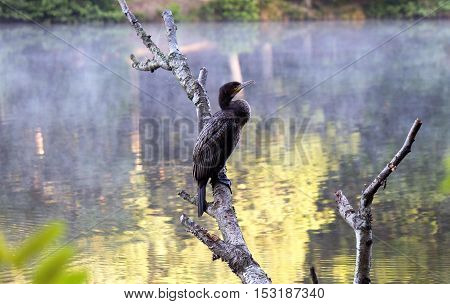 Early morning Cormorant warming and waiting to feed.